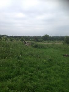 Darlands Lake Nature Reserve, Mill Hill and Totteridge 3