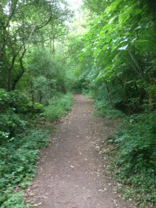 Darlands Lake Nature Reserve, Mill Hill and Totteridge 6