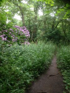 Darlands Lake Nature Reserve, Mill Hill and Totteridge 12