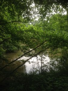 Darlands Lake Nature Reserve, Mill Hill and Totteridge 18
