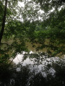 Darlands Lake Nature Reserve, Mill Hill and Totteridge 19