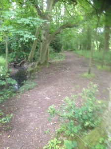 Darlands Lake Nature Reserve, Mill Hill and Totteridge 31