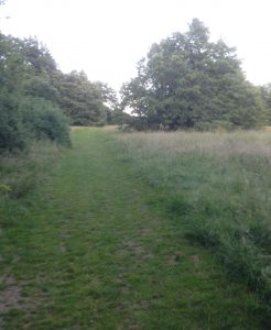Arrandene Open Space, Mill Hill 18