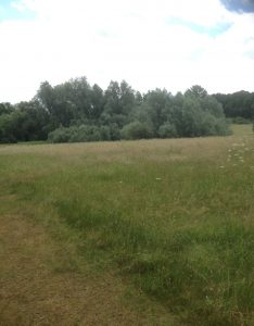 Brook Farm Open Space, Totteridge 123