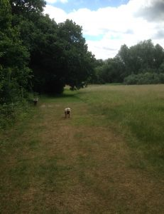 Brook Farm Open Space, Totteridge 124