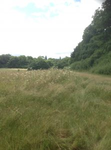 Brook Farm Open Space, Totteridge 125