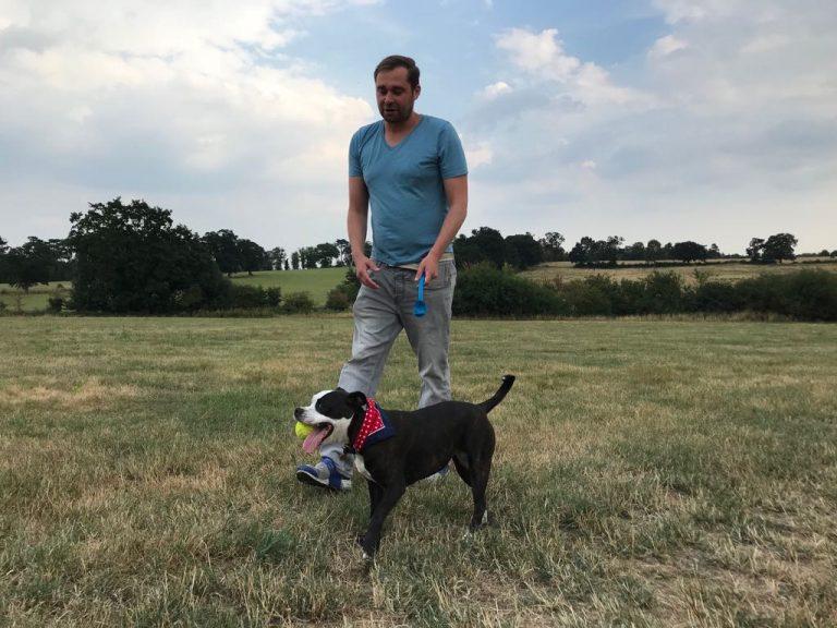 Lola - Staffordshire Bull Terrier