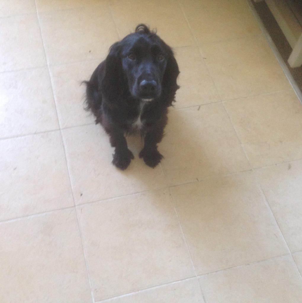 Jasper - Dog