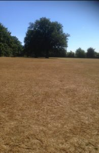 King George's Fields, Barnet 9
