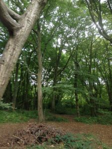 Bentley Priory Open Space, Stanmore 7