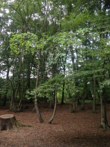 Bentley Priory Open Space, Stanmore 5